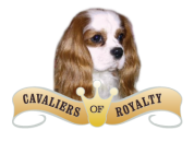 King Charles Spaniels|Cavalier King Charles Spaniels Puppies For Sale San Diego